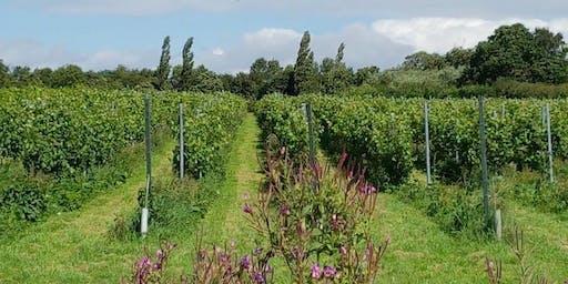 Vineyard Experience (Tour & Tasting)