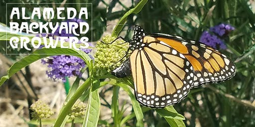 Save Monarchs in Alameda!