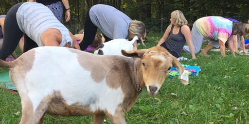 7/27 Saturday Evening Goat Yoga