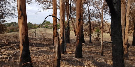 Post-fire shelterbelt design, fire ecology and managing environmental weeds tickets