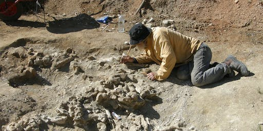 Treasures From the Field – Alcoota Fossils Curator Talk