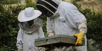Beekeeping Experience Sessions Summer 2019 - Cardona & Son