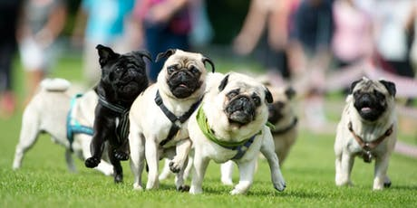 Dogs in the Park Speers Point  tickets