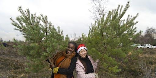 Pick a Pine