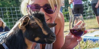 Goat Yoga Katy & Sangrias! - Goat Yoga in Houston & Fulshear