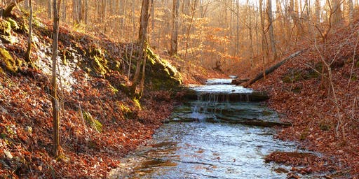 Fall Foliage Hike at Beaman Park