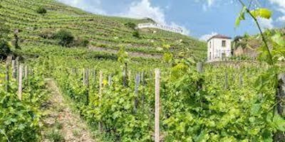 Taste the Rhone with Chapoutier