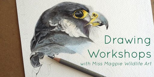 Learn to draw a woodpecker  - a beginner's introduction to coloured pencil
