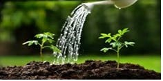 Watering the Garden 2019/20 - Spiritual Accompaniment and Social Change