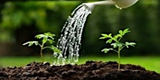Watering the Garden 2019/20 - Introduction to Discernment & Making Choices