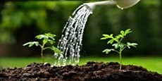 Watering the Garden 2019/20 - Can anything good come out of Nazareth?