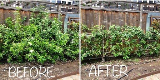 Espalier Fruit Tree Pruning Workshop