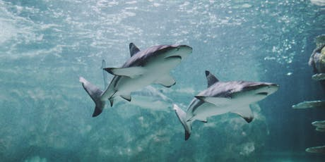 SHARK CONSERVATION EVENING tickets