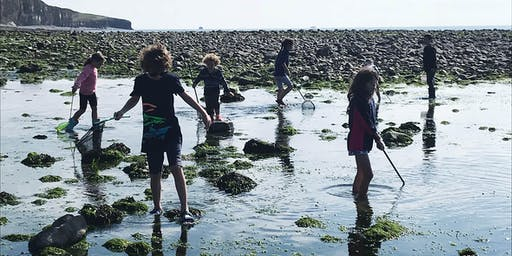 Home Ed (Rockpools 26/7/19) Gower & Swansea Bay Group