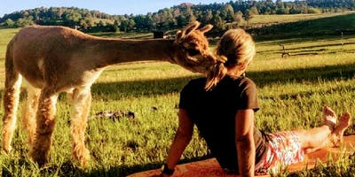 """Join us - Restorative evening """"Alpaca Yoga"""" relax with our Alpacas"""