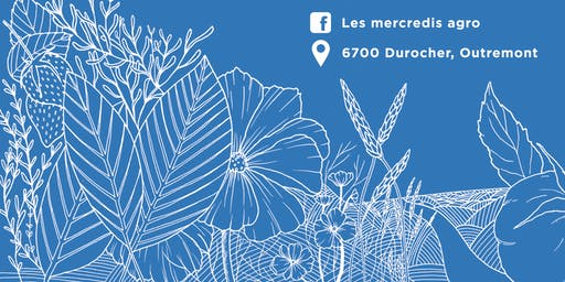 Illustration botanique avec Laucolo