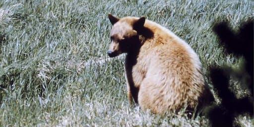 Rox-Revealed: Bears in the Neighborhood-Patio
