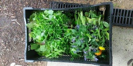 Edible Weeds Workshop tickets