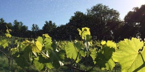 Introduction to Biodynamic Winegrowing, Bristol - 1 Day Workshop