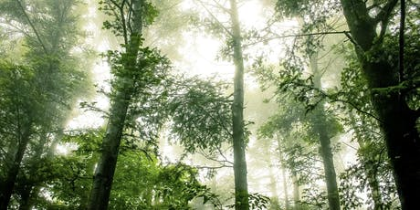 LGBTQ+ Forest Bathing in the Heath tickets