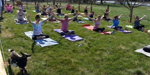 Cool Hollow Goat Yoga with Lindsay