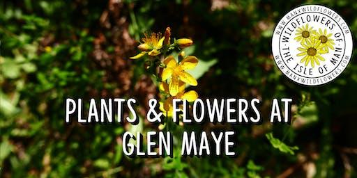 Plants & Flowers at Glen Maye