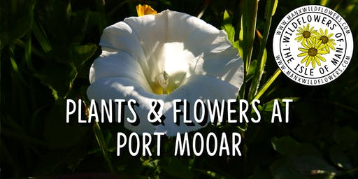 Plants & Flowers at Port Mooar