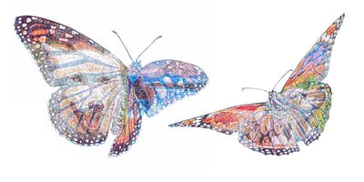 ENDANGERED WILDLIFE COLOUR BIRO DRAWING WORKSHOP