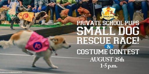 1st Annual Small Dog Rescue Race + Costume Contest