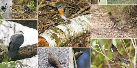 Birdwatching on Berry Mountain, NSW tickets