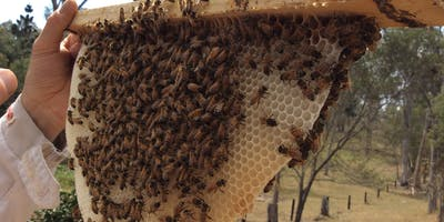 Introduction to Top Bar Beehives