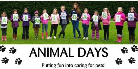 Cheltenham Animal Shelter Experience Day - Smalls & Dog Walking (Afternoon) tickets