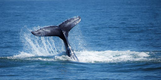 EXPLORE! NYC Wild! American Princess Whale and Dolphin Watching Cruise, Riis Landing, Queens