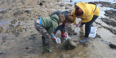 West Sands Rock Pooling Event