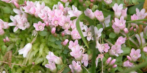 The plants of Burnham Beeches