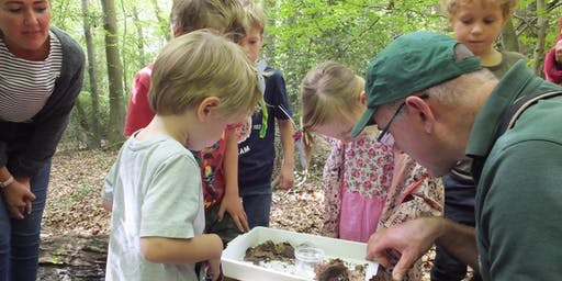 Woodland Wonders - Family wildlife walk