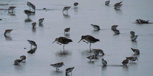 NYC Wild! Shorebird Season: Queens: Jamaica Bay Wildlife Refuge Walk