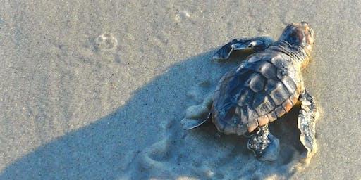 Sea Turtle Movie