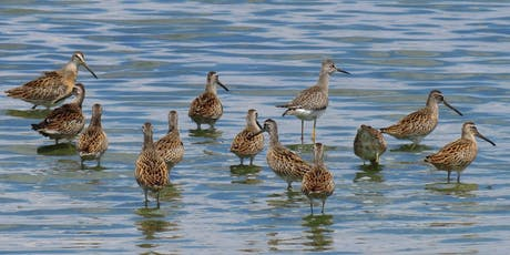 CANCELLED: NYC Wild! Shorebird Season: Queens: Jamaica Bay Wildlife Refuge Walk tickets