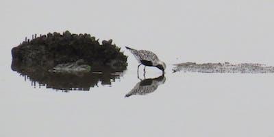 NYC Wild! Shorebird Season: Bayonne Golf Club, Bayonne, NJ: Photography and Nature Walk