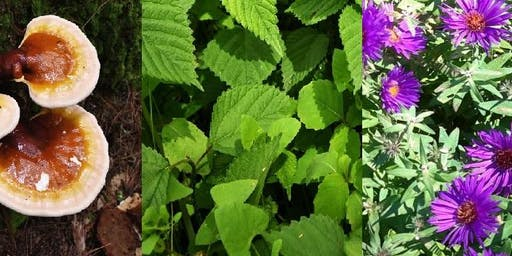 Foraged Herbs for Asthma Relief with John Kelbel