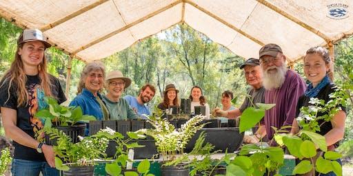 Grow Redwoods for Coho Salmon: Nursery Volunteer Day
