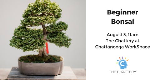 Beginner Bonsai