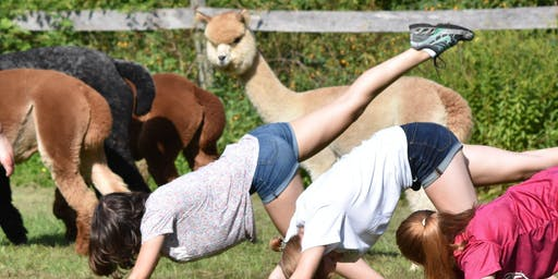 Yoga With Alpacas - August 24 @ 9am