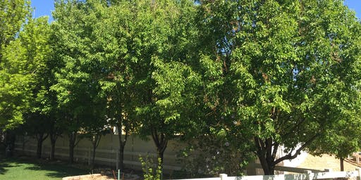 CSU Yard and Garden Boot Camp - Tree Care and Tree Selection