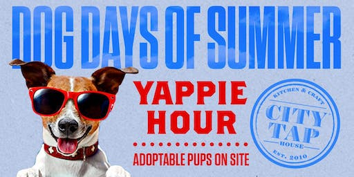 Yappie Hour: Dog Days of Summer