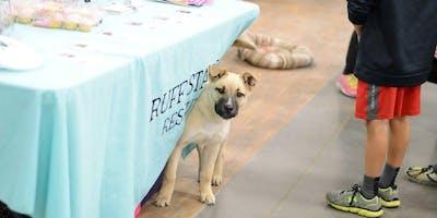Waite Park Petsmart adoption day event