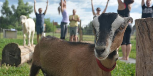 Baby Goat Yoga & Farm Tour - Mountain Flower Goat Dairy, Boulder