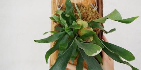Plants & Wine: Fern Mounting Workshop tickets