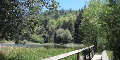 Palomar Mountain Car Camp
